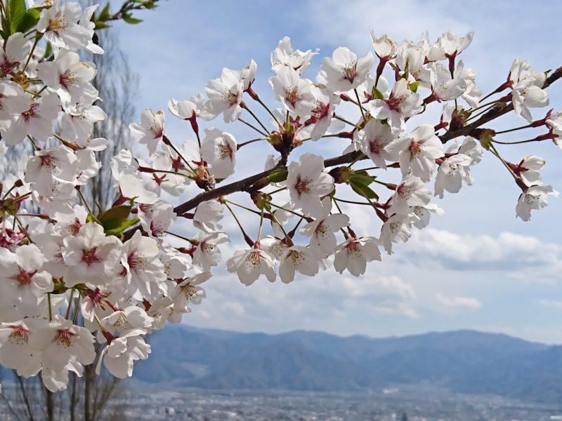 富山県にお住まいのまみさん(女性)からのアキレス腱断裂復活報告