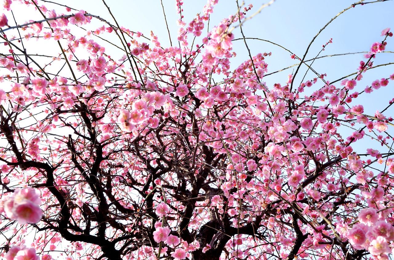 アキレス腱断裂から復活して大きな花を咲かせましょう!