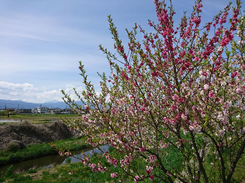 令和元年スタート!アキレス腱断裂を乗り越え大きな花を咲かせましょう!